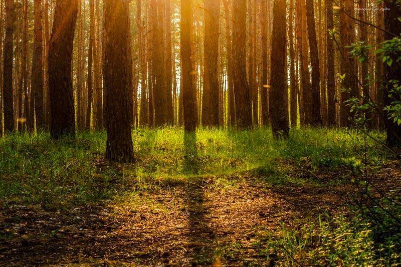 Blog développement durable