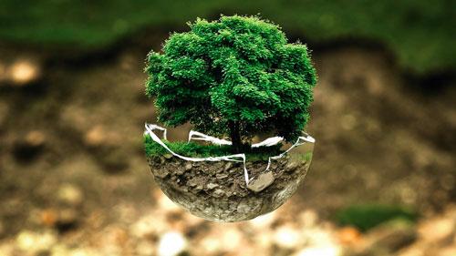 Définition de l'écologie